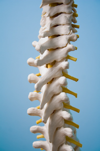 Spine photograph